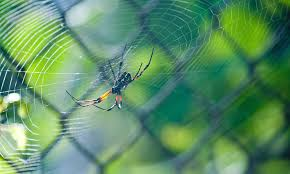 Top 12 Best Spider Killers