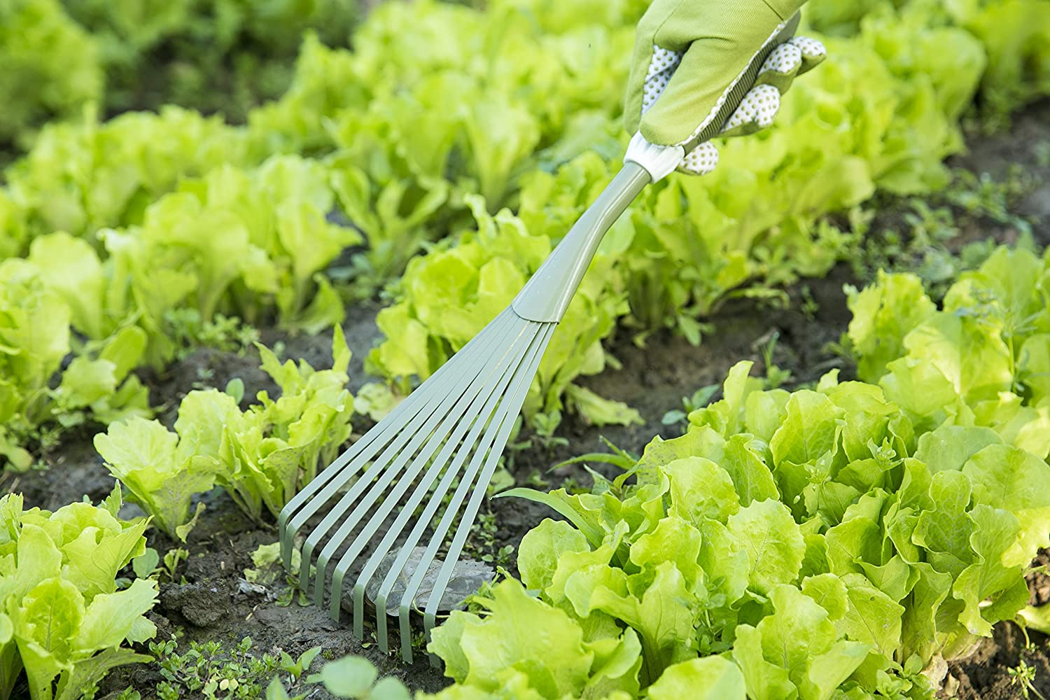 Top 10 Best Garden Tools in 2020